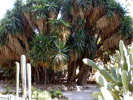 botanic-garden-valencia