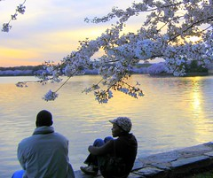 Sunset of the Blossoms (Kurlylox1) Tags: pink flowers sunset boys water washingtondc quality sakura cherryblossoms pixels yoshino tidalbasin blueribbonwinner liquidgold supershot mywinners diamondclassphotographer flickrdiamond explorewinnersoftheworld perfecttphotographer