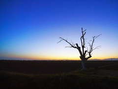 Ancient pride (Sator Arepo) Tags: leica tree night landscape evening reflex ancient loneliness nightscape delta pride drought transfer ebro zuiko digilux deltebre trasvase deltadelebro 714mm digilux3 zd714mm saynotodeltastransfer mdd080929 gettyimagesiberiaq2 gettyimagesiberiaq3