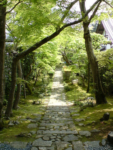 a pathway through the forest in japan