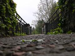 Vialetto accesso al parco di Villa Toeplitz (enricobernasconi (busy)) Tags: trees parco macro alberi ponte villa varese lanscape paesaggio prospettiva pavimento 21100 vialetto toeplitz