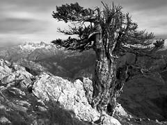 Pierzu (jtsoft) Tags: bw mountains landscape asturias olympus tejo ponga picosdeeuropa e510 peñasanta zd1122mm jtsoftorg pierzu mdd080929