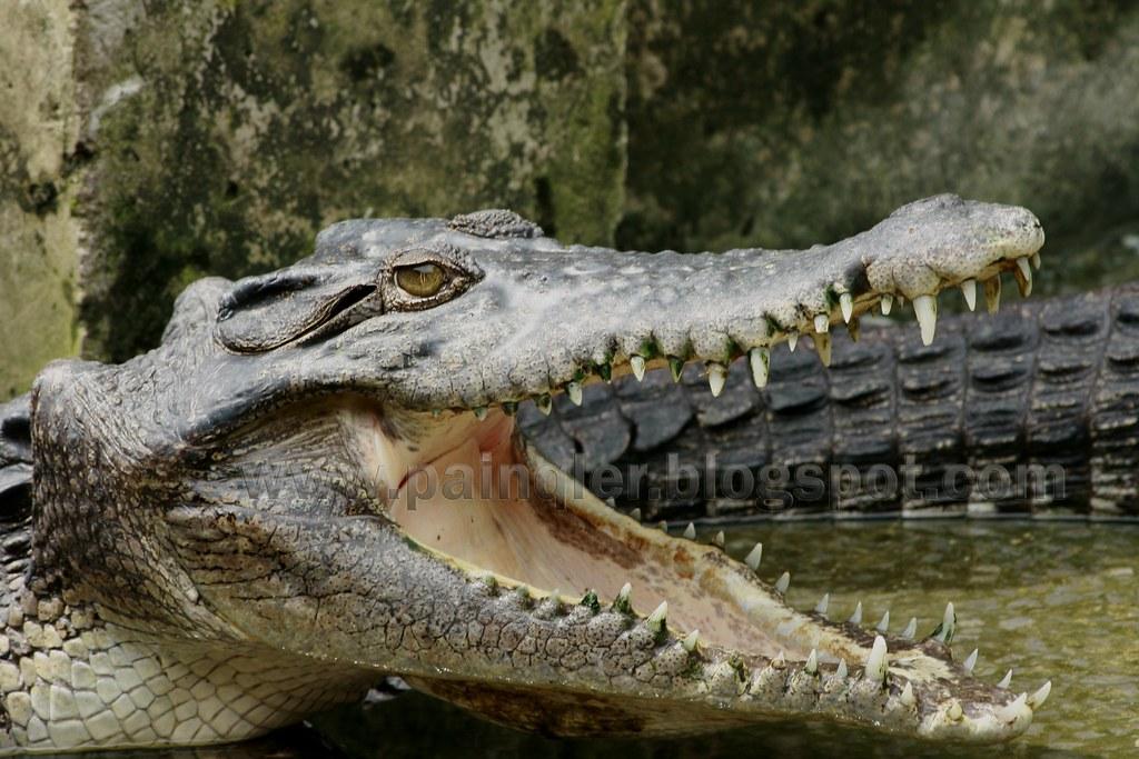 croc-hunting17