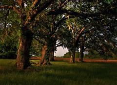 Oak Shadows (edwardleger) Tags: trees tree rural oak louisiana shadows country rope swing 2008 edwardleger exquisiteimage edwardnleger