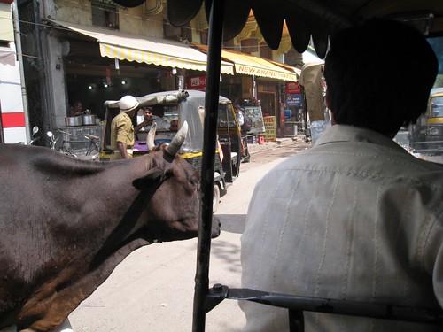 Rickshaw ride to Bodhgaya