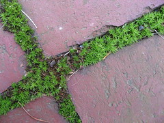 Sustainable sidewalk (Plant Design Online) Tags: urban design optimization sustainability interactions