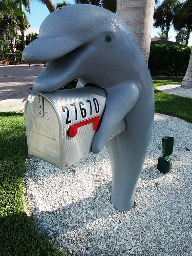 Bonita Springs dolphin
