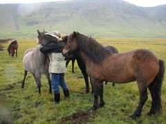 IMG_3764 (Familj i Lund) Tags: horses iceland baldur vaka