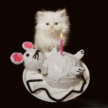 kitten birthday