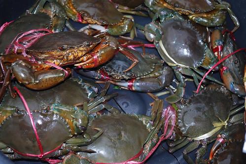 Cambodia's crab