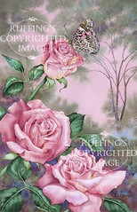 """Pink Roses and a Painted Lady"" AER16 by A E Ruffing Butterfly"