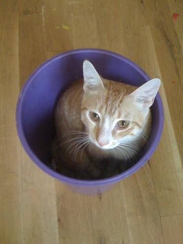 disposal gato