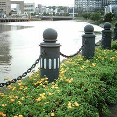 【写真】ミニデジで撮影した汽車道の花