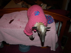 Pua in her new sweater