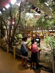 Tokyo 2008 - 國立科學博物館 - 第三階(7)