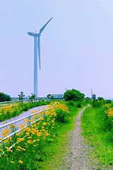 Flower Path (*Sakura*) Tags: trip summer vacation 6 flower film windmill japan landscape bluesky explore sakura  agfavista100 windgenerator  sakura
