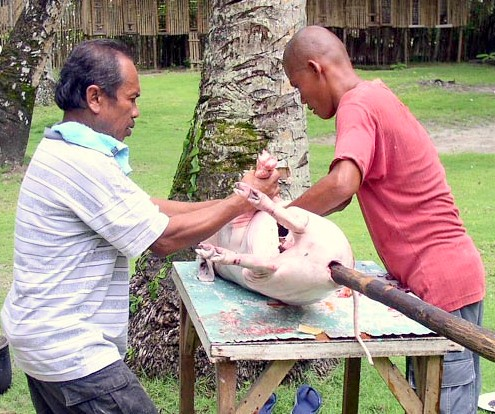 Siargao Island, Surigao del Norte roasting pig lechon traditional way rural scene  Buhay Pinoy Philippines Filipino Pilipino  people pictures photos life Philippinen
