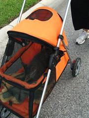 Maggie rides in her stroller