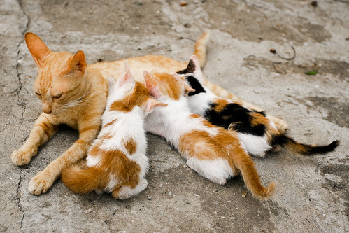 フリー写真素材, 動物, 哺乳類, ネコ科, 猫・ネコ, 家族・親子(動物), 子猫・小猫,