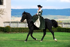 Reiterin im Damensattel - horsewoman with side saddle (Der Kremser) Tags: show horse castle birds animals austria tiere sterreich falcon schloss pferd renaissance niedersterreich falcons saddle birdsofprey kamp falken burg falconer falke sattel falkner hoyos sidesaddle greifvgel loweraustria horsewoman reiterin rosenburg n kamptal damensattel renaissanceschloss greifvgelschau