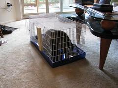Zellie's feeding cage