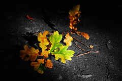 Autumn Contrasts (DerNetteAlex) Tags: autumn light shadow color tree fall nature contrast germany landscape deutschland leaf laub herbst natur spotlight blatt landschaft baum colorkey nikon1855mm nikond40