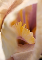 Our Flowers20080501_470 (Psycho_Babble) Tags: flowers flower macro nature diamondclassphotographer flickrdiamond goldstaraward
