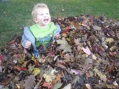 2008.10.19-Leaves.01.jpg