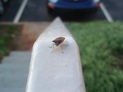 bug and bug