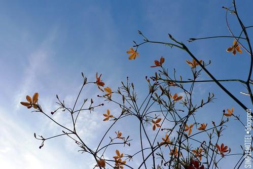 PLR Flower 01L