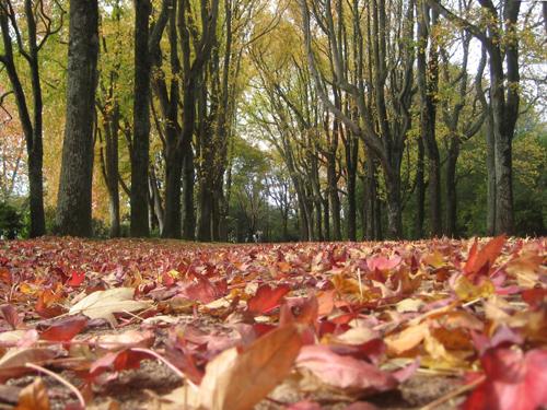 Outono em Serralves