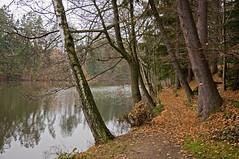 verlaubt (lg Fotografi) Tags: autumn fall austria herbst weg waldviertel litschau woodquarter herrensee