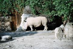 Negative0-04-02(1) (ken0915) Tags: animal eos5 ef28105 dnp200