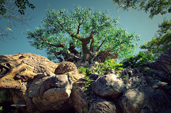 Disney - Disney's Animal Kingdom - Tree of Life