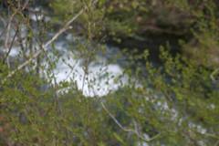 IMG_4756 (shinyai) Tags: japan aomori hirosaki