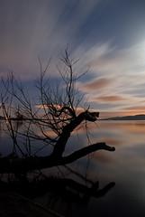 Moonlit Loch Leven (Kufwit) Tags: cloud reflection silhouette night clouds scotland long exposure branch moonlight loch leven kinross