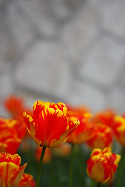 turuncu çiçek