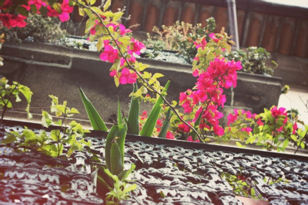 fleurs-balcon.jpg_effected