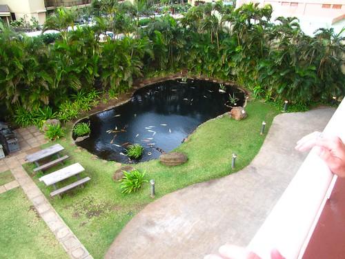 koi pond from the balcony