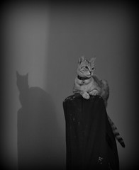 Mirtilla on the harp (Terry Moran Photography) Tags: birthday italy cat torino nikon san italia nikkor camogli portovenere turin damiano asti d3100