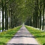 Beemster: Volgerweg landscapein spring