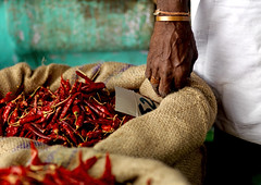 Man selling red hot pepper at the market - India (Eric Lafforgue) Tags: red india bag rouge democracy piment hand market indian main sac indie indi madurai indien hind indi inde hodu southasia indland  hindistan indija   ndia hindustan   lafforgue   ericlafforgue hindia  bhrat  702829 indhiya bhratavarsha bhratadesha bharatadeshamu bhrrowtbaurshow  hndkastan