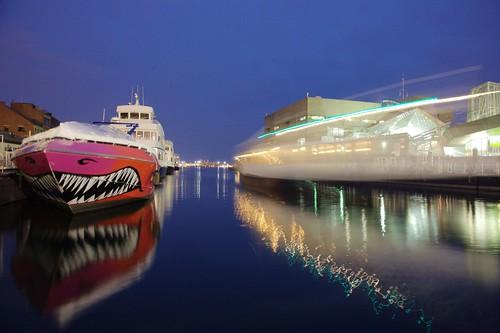 shark boat