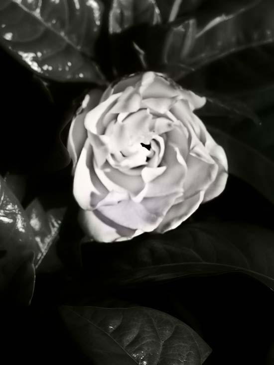 Photography - Black Gloss by Nicholas M Vivian