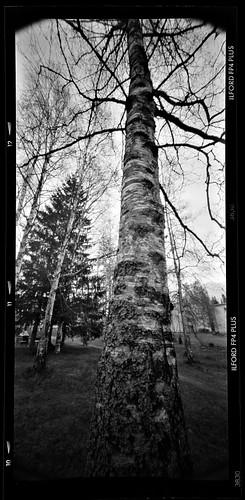 tree6x12