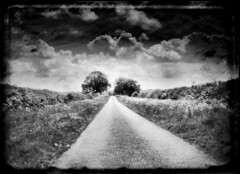 lonely road (And Soon the Darkness) Tags: road trees blackandwhite bw clouds digital path country samsung lincolnshire belvoir helluva lincs ttv samsungdigimax goldenmix fakettv aplusphoto excellentphotographerawards theperfectphotographer