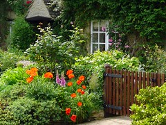 Minster Lovell, Oxfordshire (Oxfordshire Churches) Tags: uk england unitedkingdom panasonic poppies oxfordshire foxgloves cottages naturesfinest minsterlovell cottagegardens lumixtz3 oldpostoffices ©johnward