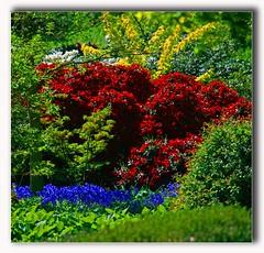 botanical garden (unicorn 81) Tags: flowers plants color nature germany garden deutschland flora colorful europa europe hamburg colourful coloured botanicalgarden hambourg plantenunblomen germania norddeutschland mapgermany niemcy γερμανία