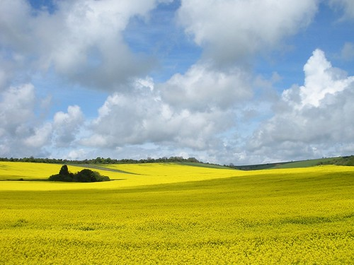 Rape Fields by howzey, on Flickr