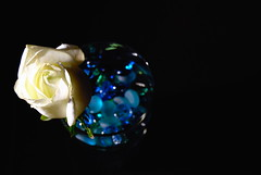 The Bride's Rose (Shakir's Photography) Tags: blue light white flower rose dark bride niece zen vase marbles whiterose   shanko